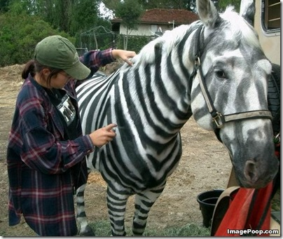 spray_painting_a_horse_into_a_zebra