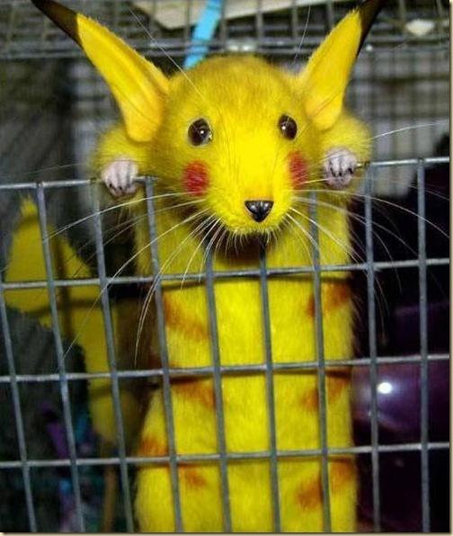 pikachu-rat