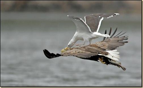 birds_in_action_5