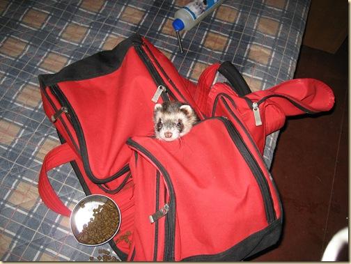 Užkluptas miegantis krepšyje