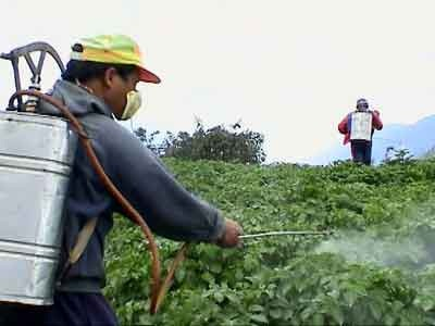 Harmful-Effects-Of-And-Pesticides[1]