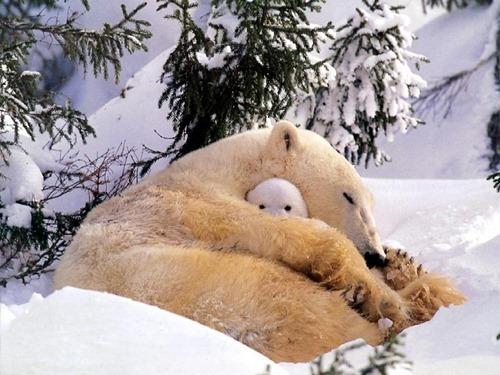 polar-bear-hug