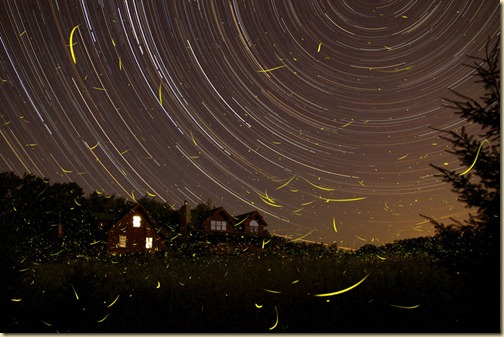 FirefliesStartrails_rosinski