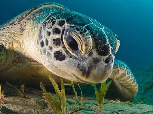 green-turtle-940x704