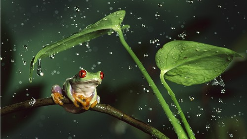 frog-and-leaves-stock-photos-604095