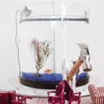 Žuvis valdanti plaktuką